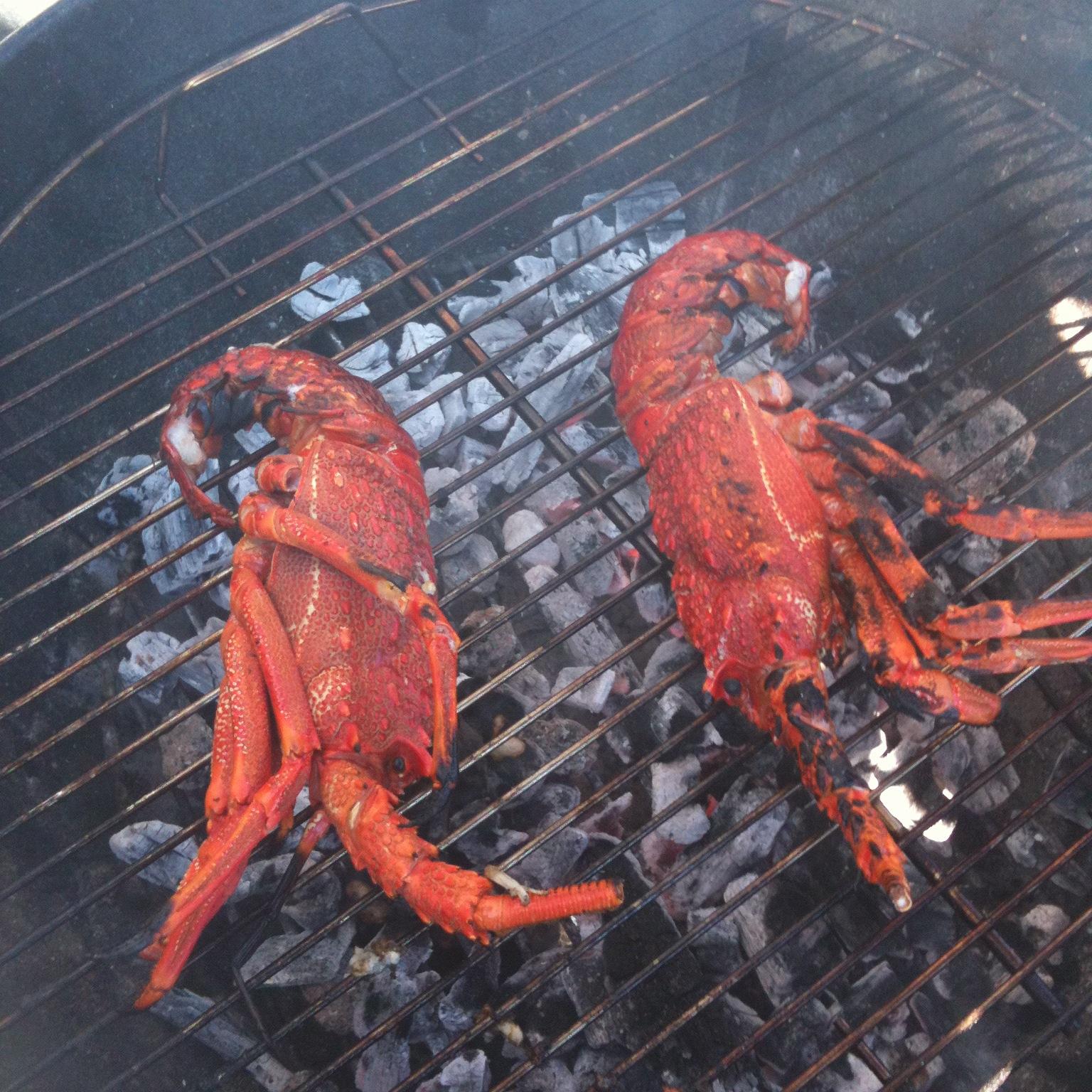 Crayfish_Fiordland.JPG